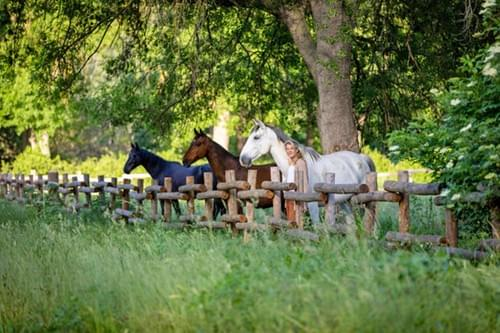Stage équicoaching 2 jours : Développer votre leadership grâce au cheval (Lavérune - 34)
