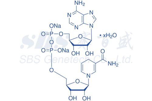 NADH (≥99%)
