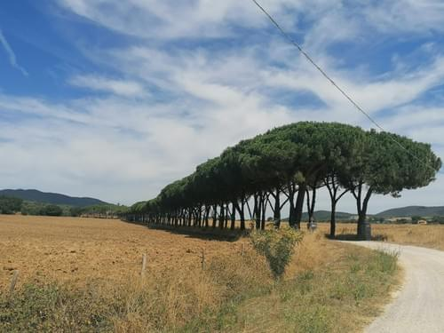Every Sunday 27th Sept | Biking under the Tuscan sun of Capalbio