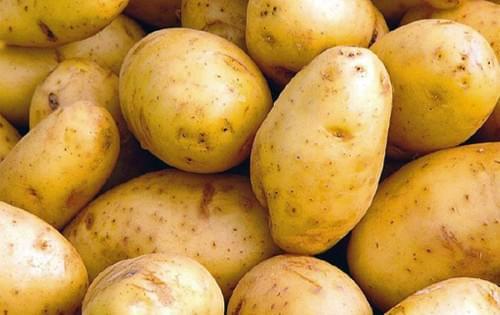 Pomme de terre Céphora BIO - TERRE SOLIDAIRE