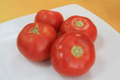 Tomate ronde BIO - TERRE SOLIDAIRE