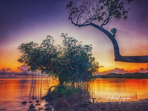 Zen (Landscape)