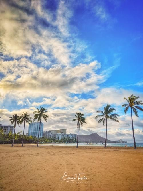 Palms in Waikiki