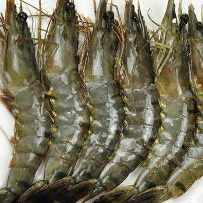 FROZEN TIGER PRAWN | 老虎虾 500G