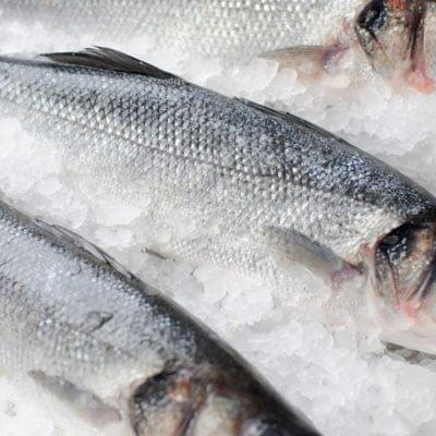 FRESH FROZEN SEABASS WHOLE | 鲜冻金目鲈鱼