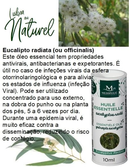Eucalipto radiata (ou officinalis), 10 ml