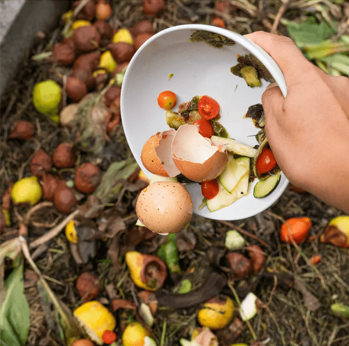 Contribute to Composting