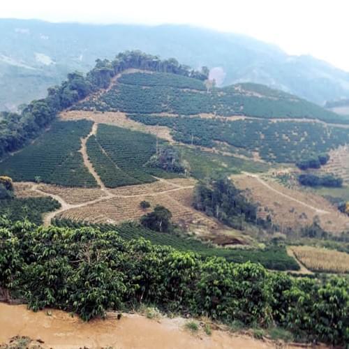 ブラジル コヘゴ・ダ・プラタ農園 パルプドナチュラル