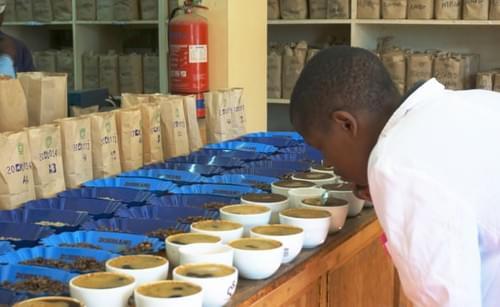 ケニア カグモイニ AA