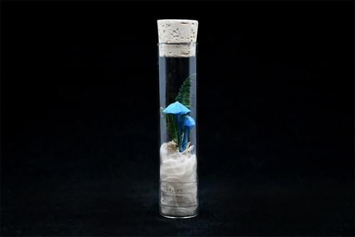 紙キノコ試験管標本 ソライロタケ