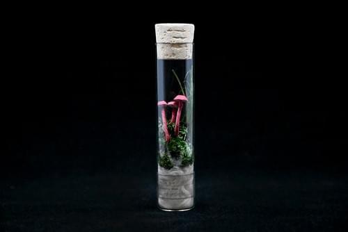 紙キノコ試験管標本 ベニヒガサ