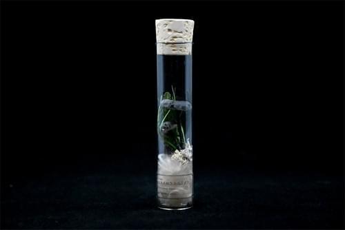 紙キノコ試験管標本 コキイロウラベニタケ