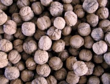 Walnuts - In-shell - per lb.