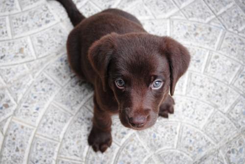 Puppy Grub