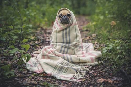 Good Doggie - Treats, Treats, and more Treats