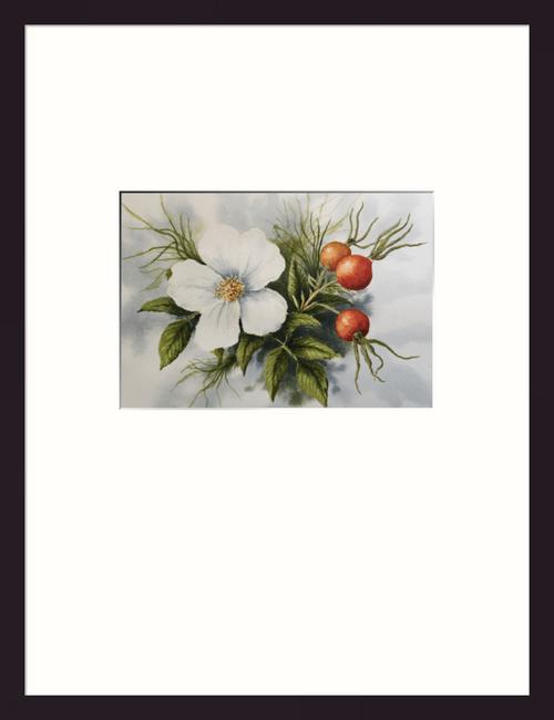 Wild White Rose
