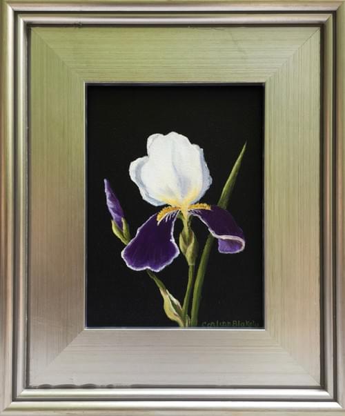 Kathy's Iris