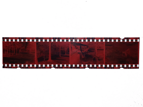 Photo Negative Strips