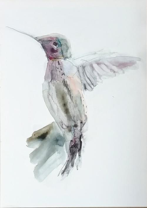Hummingbird with Black Scribble