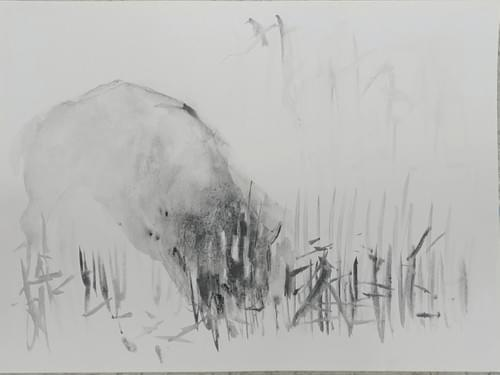Bison Memory #3