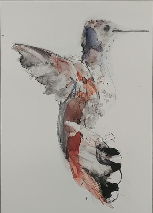 Rufous Side 1: Limited Palette