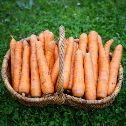Carotte orange