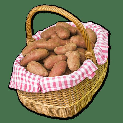 Franceline - Pomme de terre rouge à chair ferme