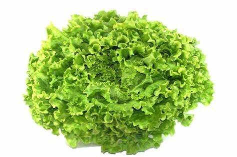 Salade batavia à la pièce