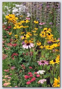 Garden Flowers / Fleurs de jardin