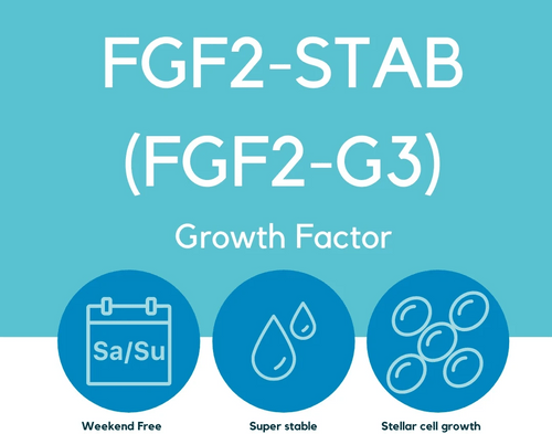FGF2-STAB (FGF2-G3) Thermo Stable Growth Factor Cat # LSR-101-10