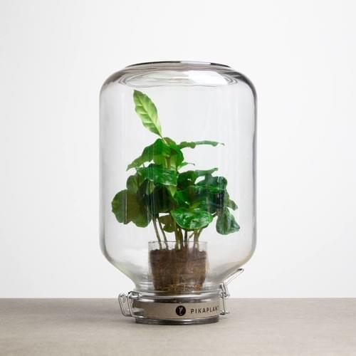"""""""JAR"""" PIKAPLANT"""