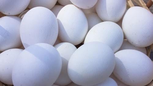 新鮮農場直送雞蛋