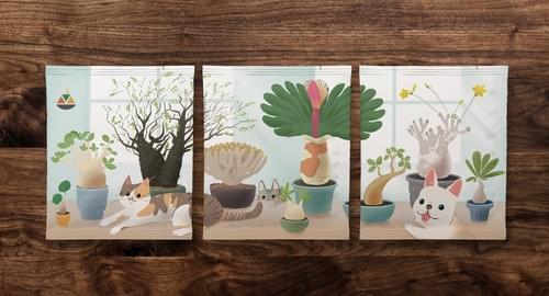 塊根植物限量包裝款(每盒3個set,共9包隨身包咖啡,整盒不拆賣)