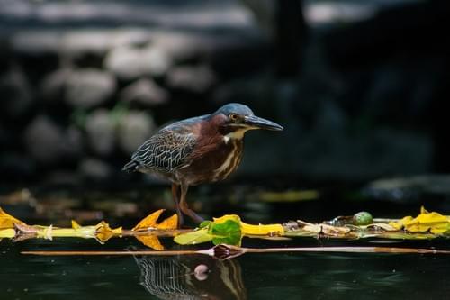 EL SALVADOR  /  El Izote Pacas Natural