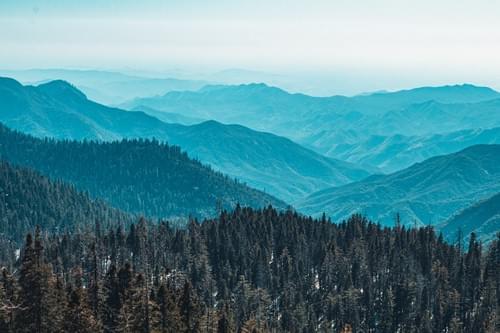 Sequoia Layers