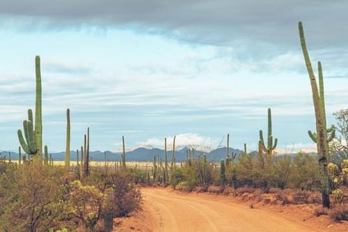 Saguaro 9