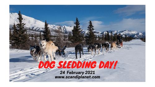Dogsledding Day 24 Feb 2021