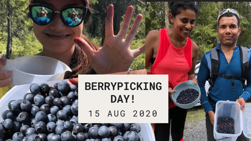 BERRY PICKING DAY 15 AUG 2020