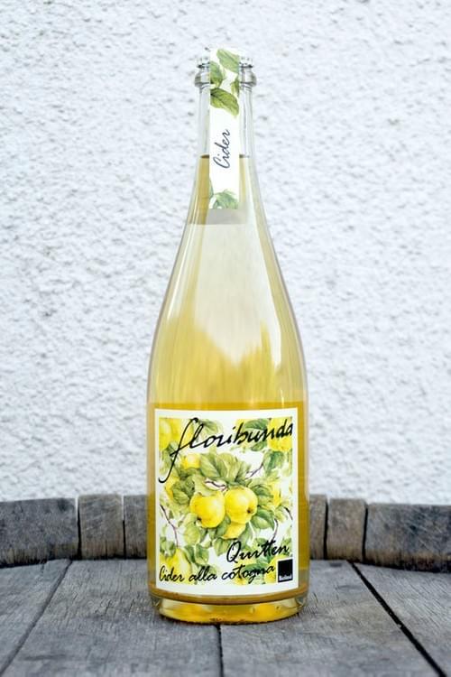 "Floribunda ""Cider Quince"" #Cider"