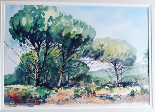 Pines in the Luberon
