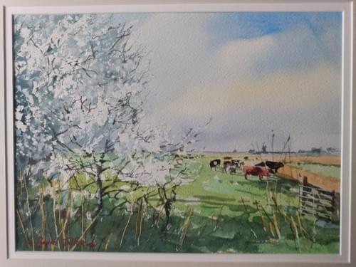 Bullace Blossom, Norfolk