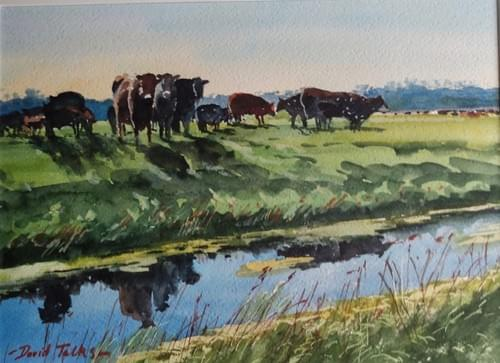 Cattle on Halvergate Marsh