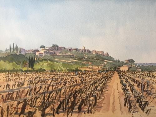 Vineyard in Provence, France