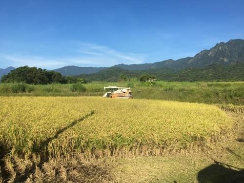 海岸山脈友善農耕米