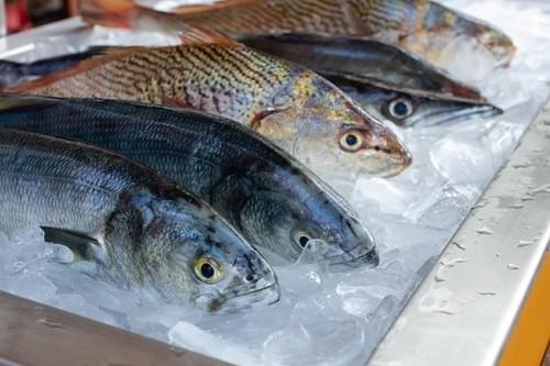 鮮魚單人包 (運費另計$200)