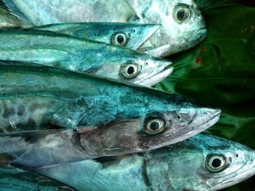 鮮魚家庭包 (運費另計$200)