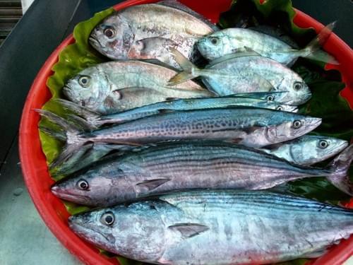鮮魚雙人包 (運費另計$200)