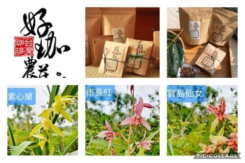 【組合】蘭花3盆(不挑款)+掛耳包