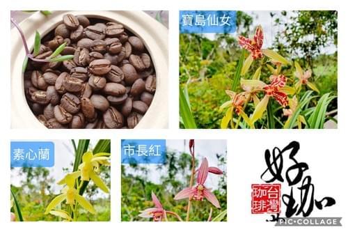 【組合】蘭花3盆(不挑款)+咖啡豆