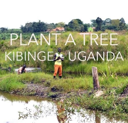 TESTING _ COME BACK LATER >>>>>>>PLANT - A - TREE....DONATE and you can have an impact!